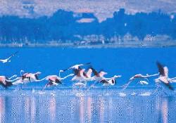 """Kırşehir """"Seyfe Gölü"""" kurudu"""