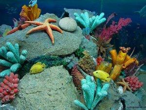 Su altında gerçekleşen fotosentezin sesi duyuldu