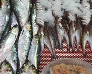 Balık ihracatında 1 milyar dolar hedefine yaklaşıldı