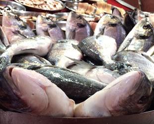 Karadenizli balıkçıların umudu 'torik' oldu