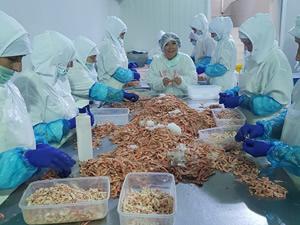 Balıkçılık sektöründe kadın istihdamı sektör sanayileştikçe artıyor