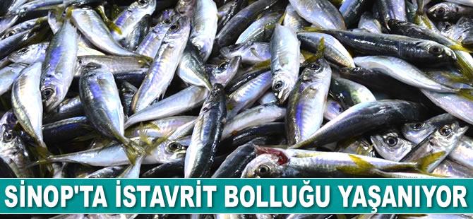 Sinop'ta istavrit bolluğu yaşanıyor
