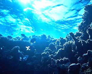Okyanus sıcaklıkları rekor seviyeye ulaştı