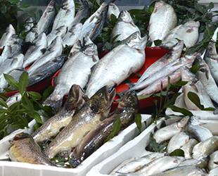 Sinoplu balıkçılar, bereketli bir sezon geçirdi