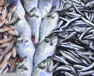 Marmaralı balıkçılar, sezondan umduğunu bulamadı