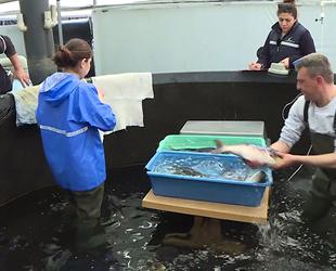 Egeli' balık ihracatçısının gözdesi olacak