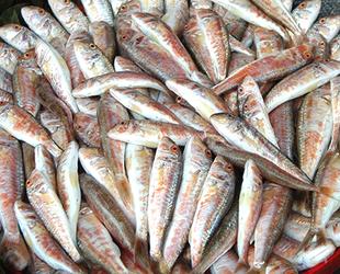 Barbunya ve Karadeniz pisi balığı tescil edildi