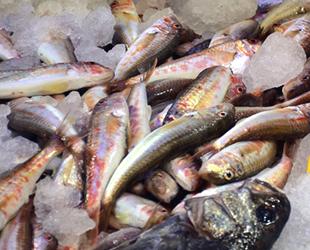 Sinop'ta Ramazan dolayısıyla balık fiyatları düştü