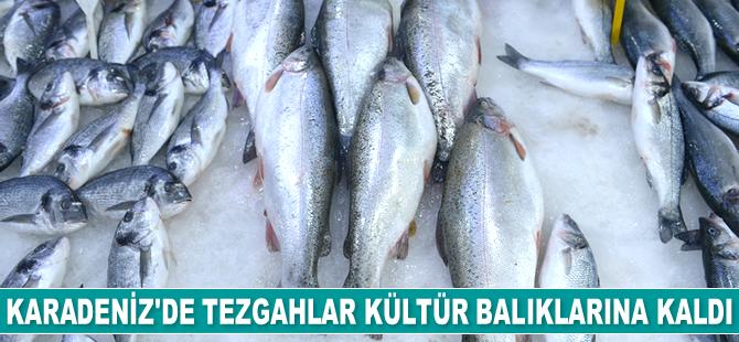 Karadeniz'de tezgahlar kültür balıklarına kaldı
