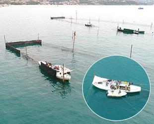 Beykoz'da dalyancılık yöntemiyle balık avlıyorlar