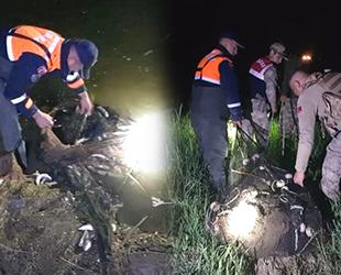 Van Gölü'nde kaçak avlanan 5 ton canlı balık tekrar suya bırakıldı