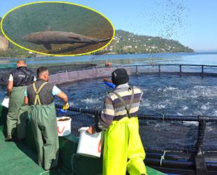 Ordu'da üretilen kültür balıkları Rusya ve Japonya'ya ihraç ediliyor
