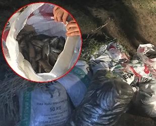 Van'da 3 bin 500 kilo kaçak avlanmış balık ele geçirildi