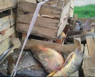 Kırklareli'de kaçak avcılıktan 96 kişi yakalandı