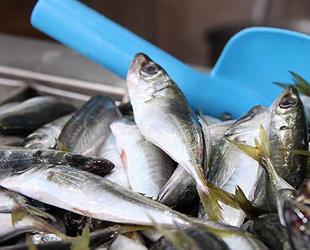 Su ürünleri ihracatında yüzde 10 artış oldu