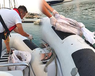 Çeşme Marina, deniz patlıcanlarına ev sahipliği yapıyor
