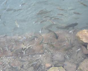 Kozluk'un 'Balıklı Göl'ü turizme kazandırılmayı bekliyor