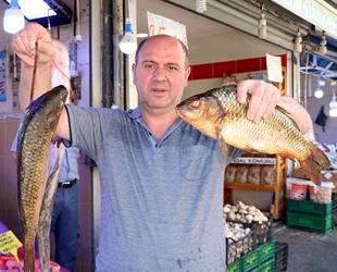Yasak bitti, tatlısu balıkları tezgahları süsledi