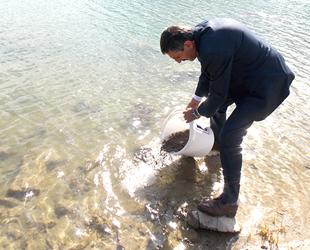 Malatya'da göletlere 130 bin sazan yavrusu bırakıldı