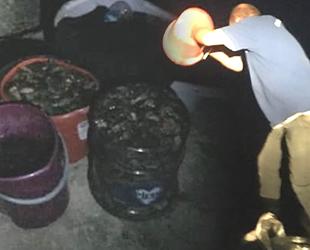 Deniz patlıcanı avcılarına 16 bin TL para cezası kesildi