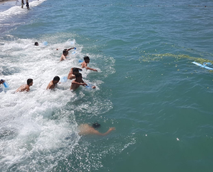 Denizden defne yaprağı toplama yarışması düzenlendi
