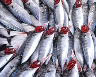 Karadenizli balıkçıların umudu hamsi oldu