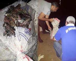 Didim'de deniz patlıcanı avcılarına 13 bin TL para cezası kesildi