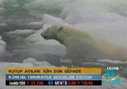 Kutup ayıları için zor günler