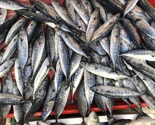 Bendevi Palandöken, balıkçılara bilinçli avlanma çağrısı yaptı