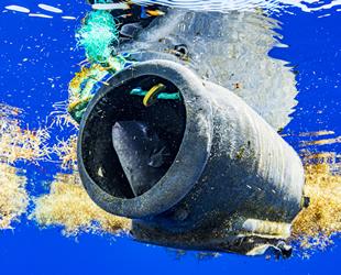 Plastik kirliliği, Sargasso Denizi'ni tehdit ediyor