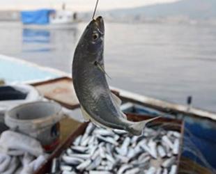 Yasadışı balık avcılığına 18 milyon lira para cezası kesildi