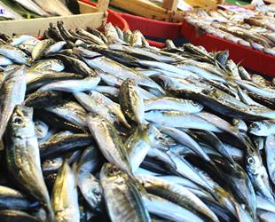 Tezgahlarda balık bollaştı, fiyatlar düştü