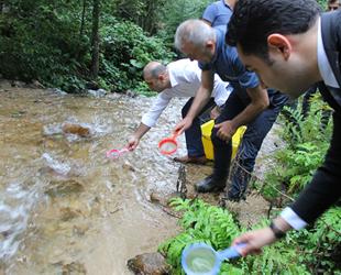 İkizdere'de 4 bin alabalık yavrusu suyla buluştu