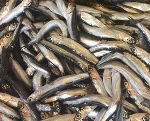 Hamsi, Karadenizli balıkçıların yüzünü güldürdü