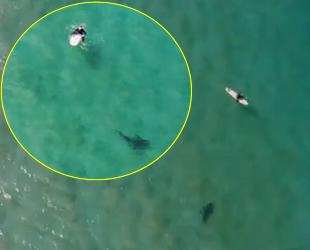 Christopher Joye, köpek balığı saldırısını drone ile engelledi
