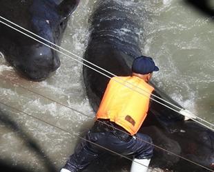 Yunus avına karşı 'Olimpiyatları Boykot' çağrısı yaptılar