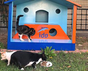 İDO, terminallerine kedi ve köpek evleri hazırlıyor