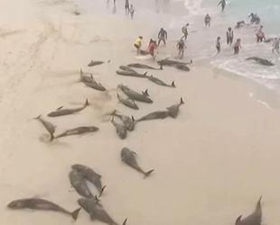 Yeşil Burun Adaları'nda onlarca yunus kıyıya vurdu