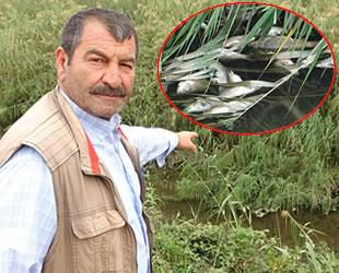Bursa'da dereye bırakılan kimyasal atıklar, tüm balıkları öldürdü
