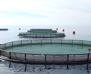 Su ürünleri ihracatı yeni üretim alanlarıyla artırılacak