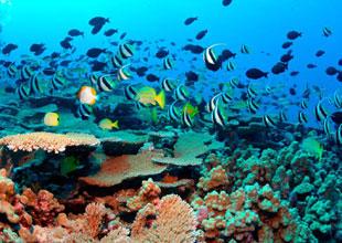Büyük Set Resifi 10 yıl içinde yok olacak