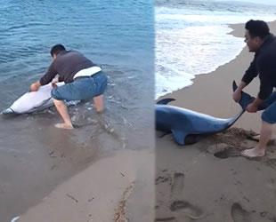 Geyikli'de kıyıya vuran yunus balığı kurtarıldı