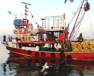 Bandırmalı balıkçılar palamut ve lüfere hasret kaldı