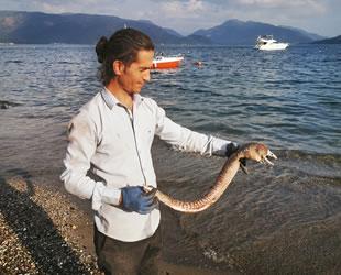 Kıyıya vuran müren balığı vatandaşları şaşırttı