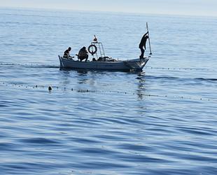 Karadenizli balıkçılar, 'difana' yöntemi ile kefal avladılar