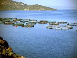 Adana kıyılarına balık çiftlikleri kurulacak