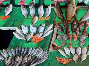 Küresel ısınma sofradaki balık çeşitliliğini tehdit ediyor