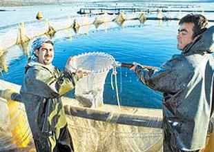 Ordulu su ürünleri yetiştiricilerine destek