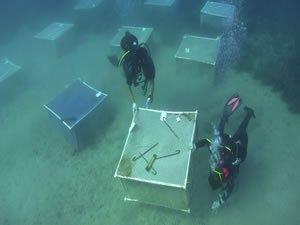 Deniz ekosisteminin koruyucuları