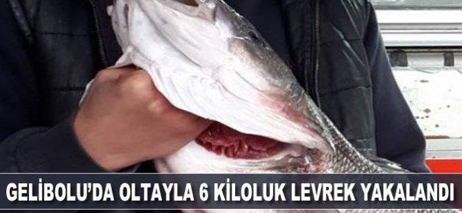 Gelibolu'da oltayla 6 kiloluk levrek yakaladı